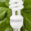 Florescent bulb in green leaves — Stock Photo #18824127