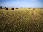 Hay field with blue sky in the background — Stock Photo
