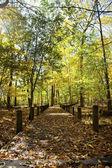 Vista alberi autunnali e passerella — Foto Stock