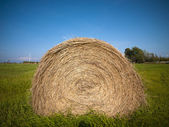 Close up of a bale in field no — Stock Photo