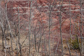 Bare Trees and Hills — Stock Photo