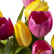 Pink and yellow tulip flowers — Stock Photo #19197487