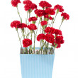 Red flowers in flower pot — Stock Photo #19198461