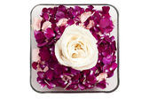 A bowl of petals with a white rose — Stock Photo
