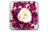 Un tazón de pétalos con una rosa blanca — Foto de Stock