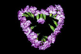 Carnation flower forming heart — Stock Photo
