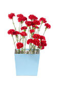Red flowers in flower pot — Stock Photo