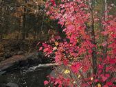 366 autumn leaves — Stock Photo