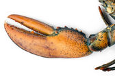 Raw lobster claw — Stock Photo