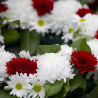 Close up shot of red and white flower wreath — Stock Photo