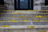 Close up shot of steps with dead leaves on them — Stock Photo