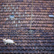 Cat on a roof — Stock Photo #19450681