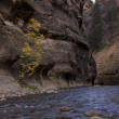 River on zion canyon — Stock Photo