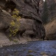 River on zion canyon — Stock Photo #19452445
