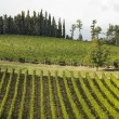 Tuscany vineyard - Stock Photo
