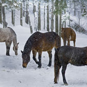 Snowy Pastures — Stock Photo