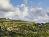Far view of a vineyard in tuscany — Stock Photo
