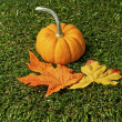 Two leaves and pumpkin — Stock Photo #19488655