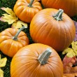 View of halloween pumpkins arranged with autumn leaves - Stock Photo
