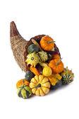Cornucopia of gourds — Stock Photo