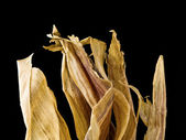 Top of dried corn husk — Stock Photo