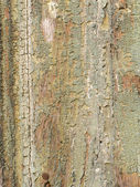 Peeled wooden surface — Stock Photo
