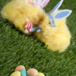 Stock Photo: 456 easter bunnies