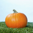 672 view of a halloween pumpkin over grass — Stock Photo