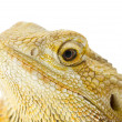 Royalty-Free Stock Photo: 688 head shot of a lizard
