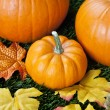 377 detailed view of halloween pumpkins — Stock Photo #19849773