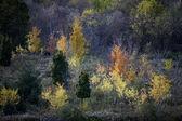 473 view of autumn trees — Stock Photo