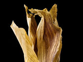 Dried corn husk — Stock Photo