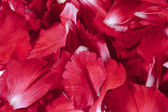 638 red flower petals — Stock Photo