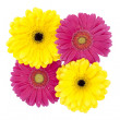 Yellow and pink flowers - Stock Photo