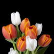 Stock Photo: Orange and white flower buds