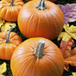 Cropped view of halloween pumpkins - Stock Photo