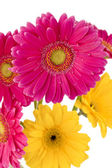 75 yellow and pink flowers — Stock Photo