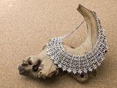 612 stříbrný náhrdelník — Stock fotografie
