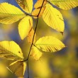 721 image of autumn leaves - Stock Photo