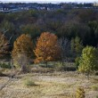 724 autumn trees - Stock Photo