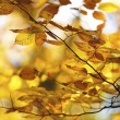 Image of autumn leaves — Stock Photo #19863129