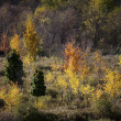 Autumn trees — Stock Photo #19864295