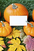 738 cropped view of halloween pumpkins with placard — Stock Photo