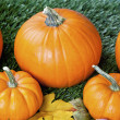 Cropped view of halloween pumpkins — Stock Photo #19872615