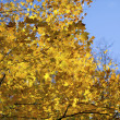 962 autumn leaves — Stock Photo