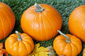 Cropped view of halloween pumpkins — Stock Photo