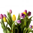 11 yellow and pink flowers — Stock Photo #19907341