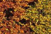 164 autumn leaves — Stock Photo