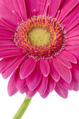205 cropped image of a pink flower — Stock Photo