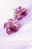 253 close up shot of two pink flowers — Stock Photo